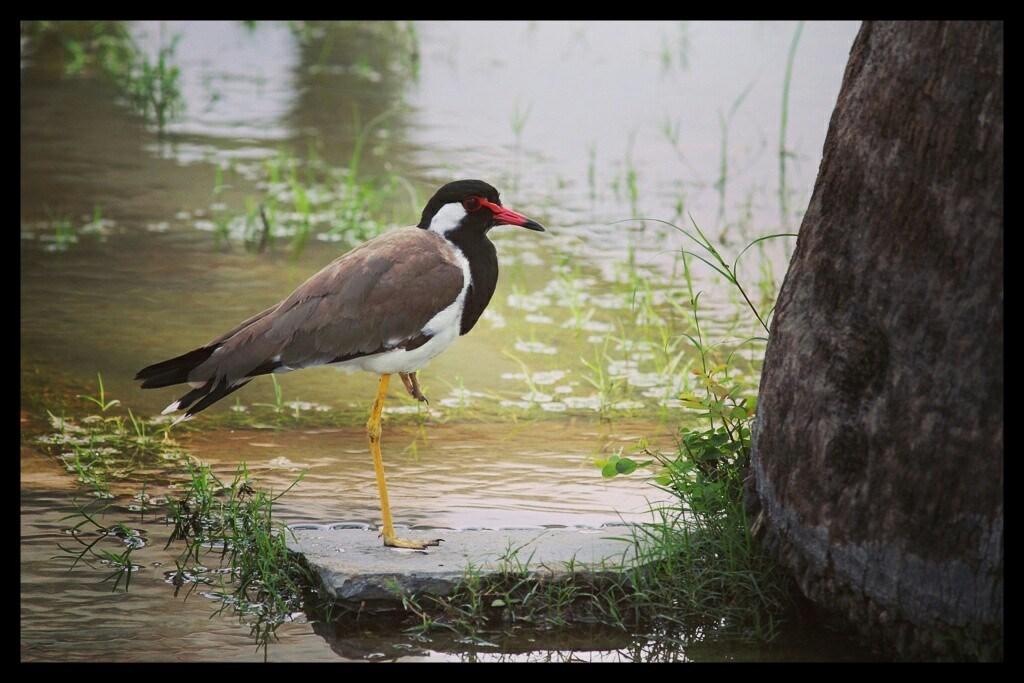 Abhijnan Mukherjee (LT MHPS) - Nehru Garden, Udaipur