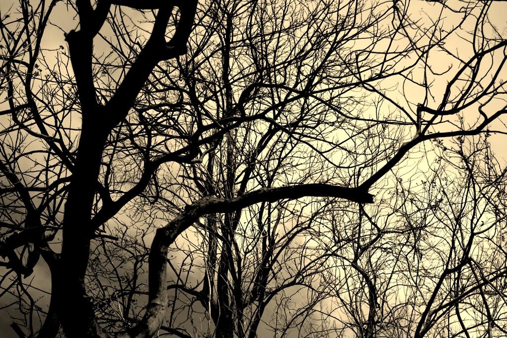 S.V.Shravan Kumar (RBG) - Creepy trees