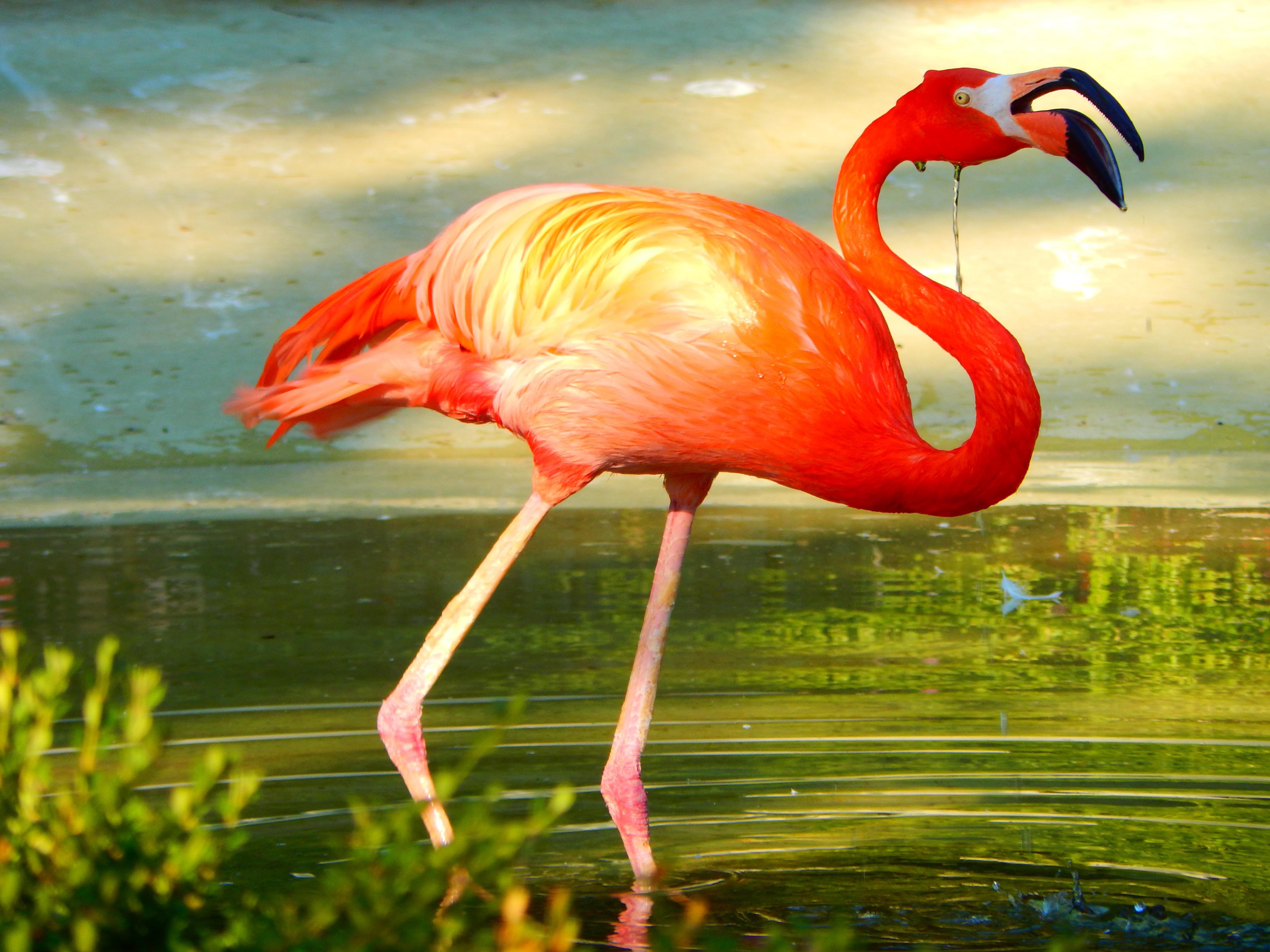 lesser-flamingo_deepan-dutta-chowdhury-lmb